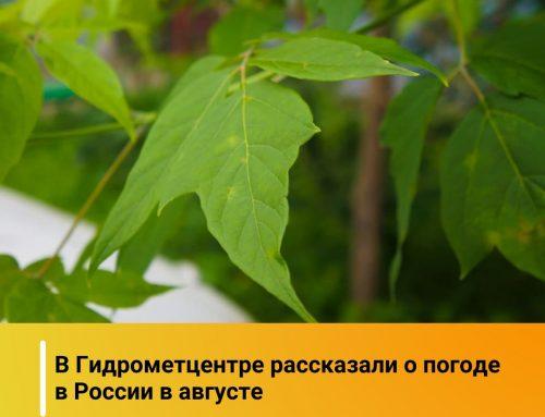 Температура в августе будет около или выше нормы на всей территории России.